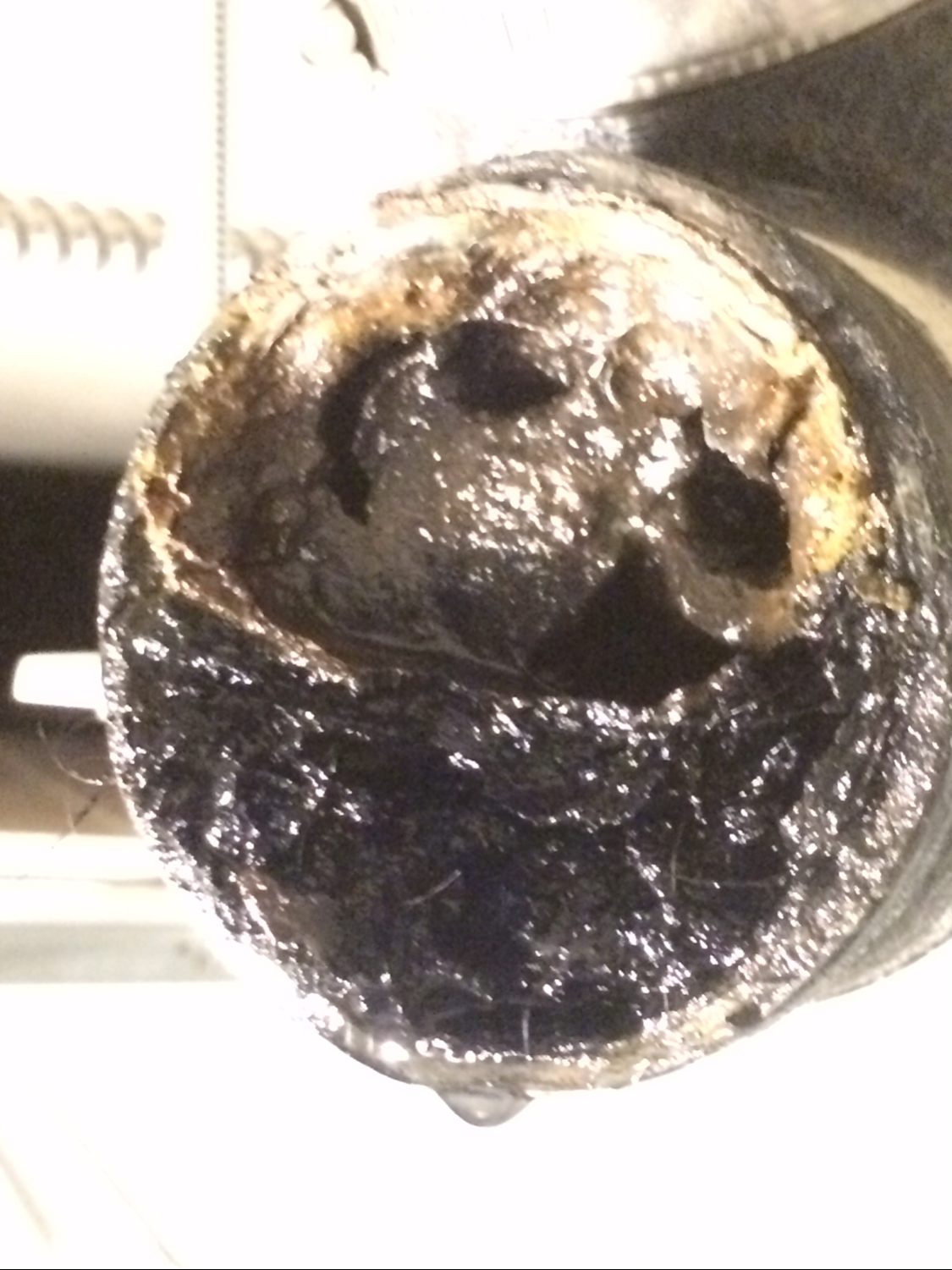 plugged-kitchen-drain-full-of-grease